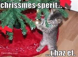 christmas cute cat quotes tridanim