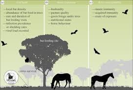 ecological dynamics of emerging bat virus spillover proceedings