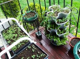 best fall vegetables to grow on your apartment balcony vertically
