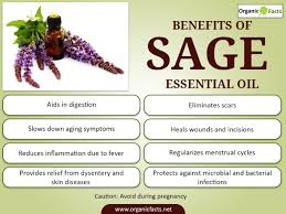 17 surprising benefits of sage essential oil organic facts