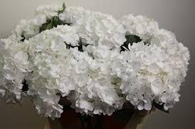 white hydrangea colors of hydrangeas flirty fleurs the florist