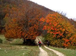 si e auto la route viewranger la forca colle dei fienili hiking route in riofreddo