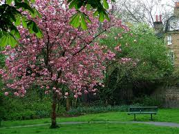 english country garden decorating photograph churchyard ga
