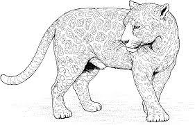 jaguar coloring pages archives and jaguar coloring page glum me