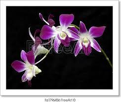 purple orchid flower free print of purple orchid purple orchid flower isolated on