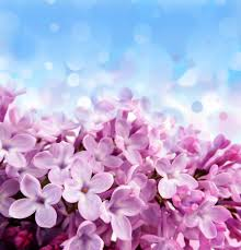 imagenes flores relajantes marketing olfativo marketing sensitivo