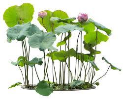 List Of Tropical Plants Names - best 25 plant pictures ideas on pinterest beautiful flowers