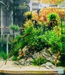 java moss live aquatic plant u2013 glass aqua