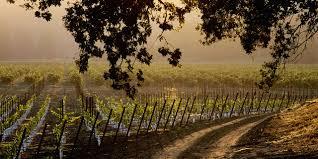 sonoma county wines u0026 wineries