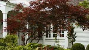 Small Shrubs For Front Yard - trees for small spaces