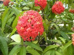 garden flowers flowering plants kerala india