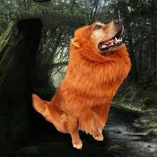 Dog Halloween Costume Lion Mane Popular Costume Lion Mane Buy Cheap Costume Lion Mane Lots
