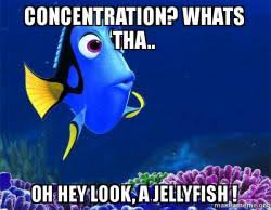 Concentration Meme - concentration whats tha oh hey look a jellyfish dory from