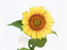 silk sunflowers artificial silk sunflowers yellow your own bouquet pyob