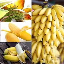 mini banana tree 100 pcs dwarf banana tree seeds mini bonsai seeds rare exotic