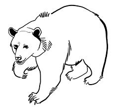 coloriage ours polaire à colorier dessin à imprimer ours