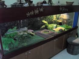 Indoor Pond by Fish Tank Square Turtle Tank Best Indoor Pond Images On Pinterest