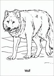 delightful wolf coloring sheet coloring 8 wolf coloring