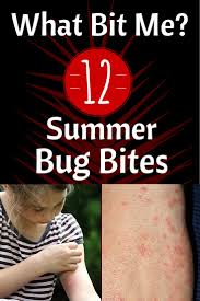 Pictures Of Tiny Red Bugs by 25 Unique Identifying Bug Bites Ideas On Pinterest Insect Bite