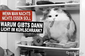 sprüche essen lustige sprüche essen und abnehmen katze im kühlschrank