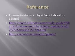 Pearson Anatomy And Physiology Lab Manual Language Of Anatomy Anatomists Have A Set Of Reference Terms That