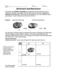 punnett square interactive notebook activities genetics and