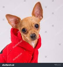 house dogs medium house dogs breeds breed dogs picture