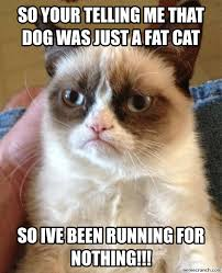 Fat Cat Meme - your telling me that dog was just a fat cat