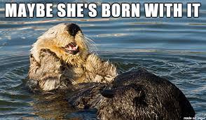 Otter Memes - opulent otter meme on imgur
