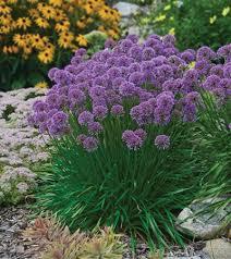 Types Of Planting Flowers - best 25 purple perennials ideas on pinterest flowers garden