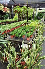 garden design garden design with wshg net get the dirt u on home