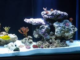 Aquascape Online 14 Best Marine Aquascape Images On Pinterest Reef Aquarium