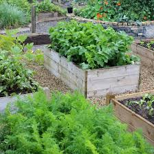 how to start a vegetable garden for beginners vegetable garden plans for beginners for healthy crops