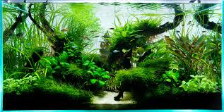 Aquascape Designs Inc Aquarium Design Group 90cm Ada Aquascape Aquarium Pinterest