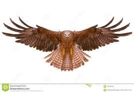 eagle bird flying hand draw stock illustration image 70225489
