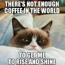 Good Morning Cat Meme - baby it s cold outside grumpy cat cat and memes
