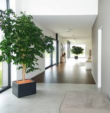Wohnzimmer Einrichten Pflanzen Stunning Moderne Wohnzimmer Pflanzen Contemporary House Design