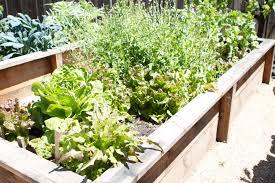 the lazy gardener u0027s veggie gardening sheet mulching the