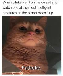 Cat Lady Meme - when you take a shit on the carpet and watch one of the most