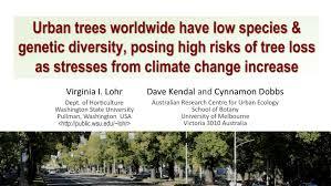 Trees Worldwide Trees Worldwide Low Species And Genetic Diversity