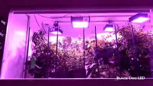 the ultimate led grow light indoor garden youtube