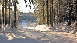 winter day in the forest wallpapers and images wallpapers