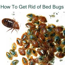 Can Bleach Kill Bed Bugs How To Get Rid Of Bed Bug Bites Naturally A Complete Guide To