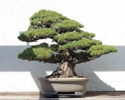 takanori aiba u0027s amazing bonsai tree castles are miniature living