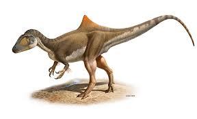 hunchback dinosaur found carnivorous