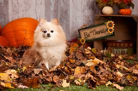 ask the vet thanksgiving pet safety tips watt avenue pet hospital