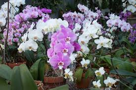 top 10 orchids for the home