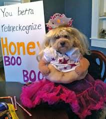 the 20 funniest dog halloween costumes ever aww hell naw