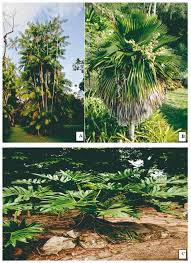 native plants of brazil brazilian biodiversity for ornamental use and conservation