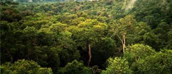 canopy amazon umd researchers use space laser technology to explain dry season